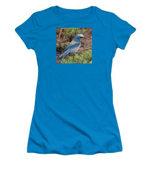 Scrub Jay Framed In Green Women's T-Shirt (Junior Cut) by Paul Rebmann