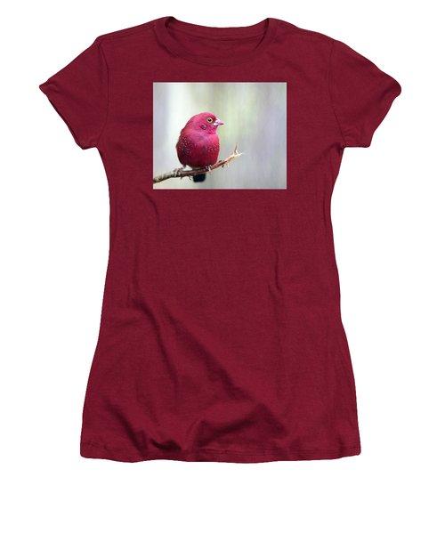 Fire Finch Women's T-Shirt (Junior Cut) by Marion Cullen