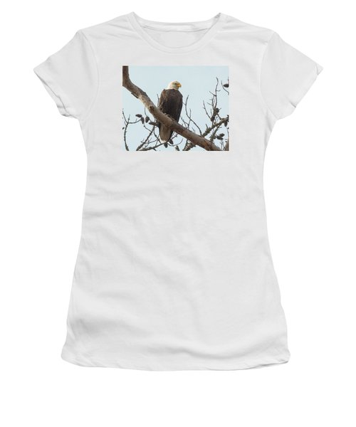 Resting Bald Eagle Women's T-Shirt