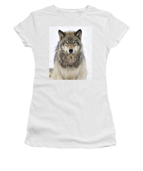 Timber Wolf Portrait Women's T-Shirt