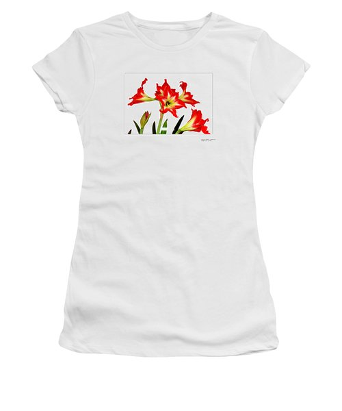 Amaryllis On White Women's T-Shirt (Junior Cut) by David Perry Lawrence