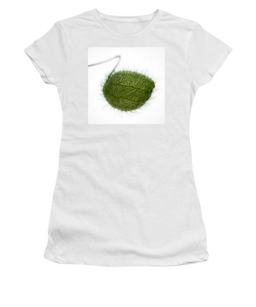 Balloon Plant Women's T-Shirt