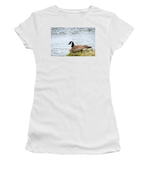 Women's T-Shirt featuring the photograph Canada Goose by Michael Chatt