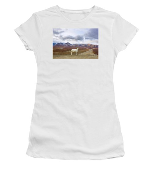 Dalls Sheep Ram Denali National Park Women's T-Shirt