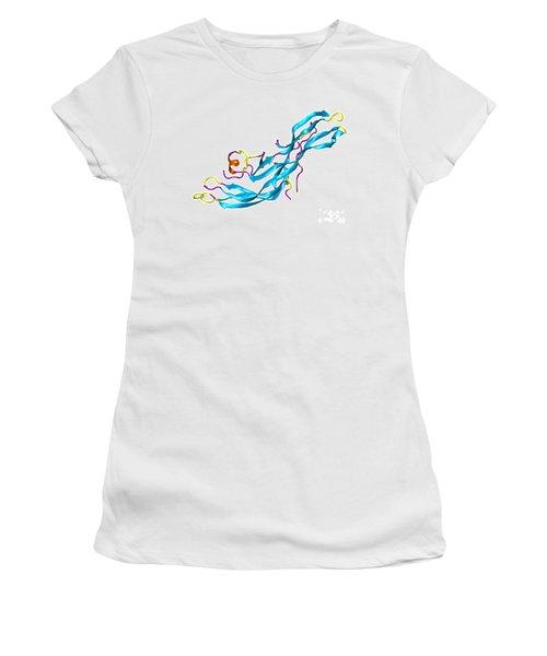 Human Chorionic Gonadotropin Molecule Women's T-Shirt