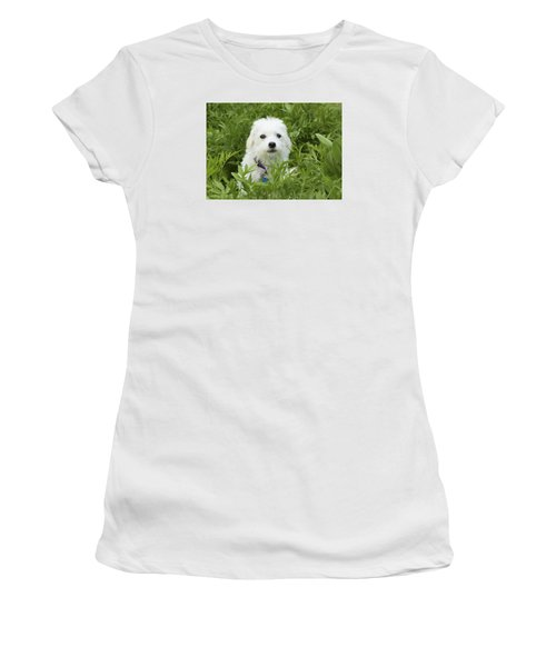 Women's T-Shirt (Junior Cut) featuring the photograph Oops Busted - Cute White Dog by Jane Eleanor Nicholas