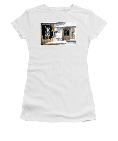 Sled Dogs Rest In Their Kennels Women's T-Shirt