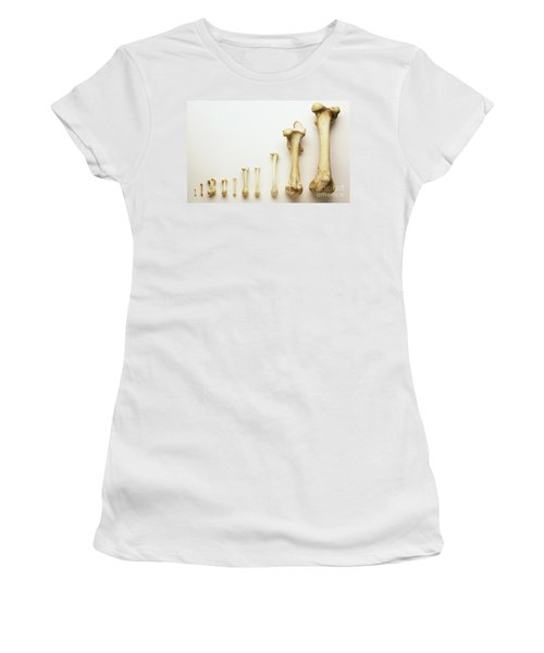 Thigh Bones From Different Animals Women's T-Shirt