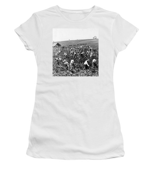 Tobacco Field In Montpelier - Jamaica - C 1900 Women's T-Shirt (Athletic Fit)