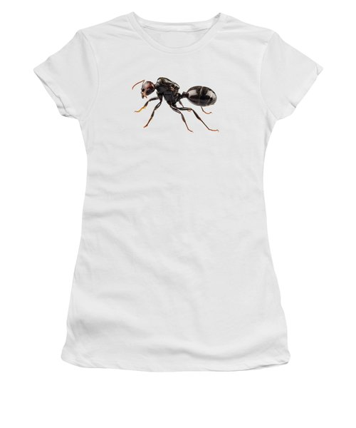 Black Garden Ant Species Lasius Niger Women's T-Shirt