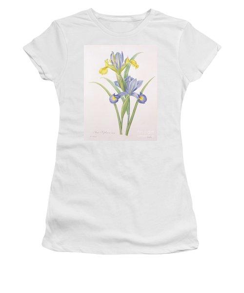 Iris Xiphium Women's T-Shirt