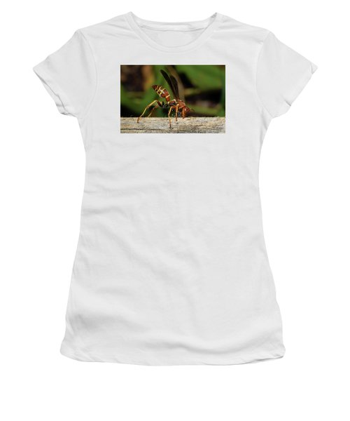 Paper Wasp Women's T-Shirt