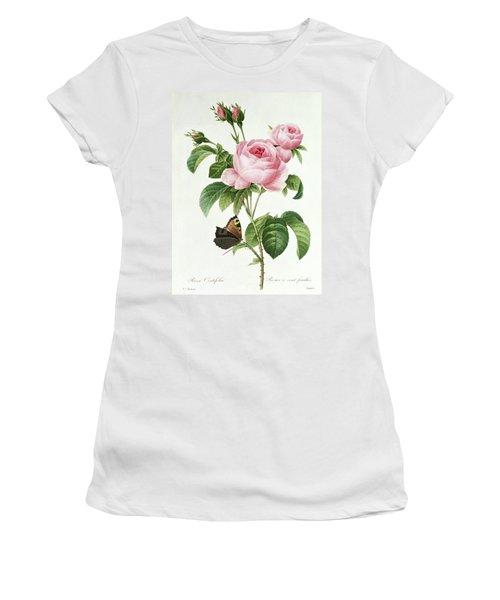 Rosa Centifolia Women's T-Shirt