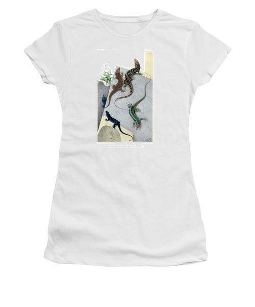 Varieties Of Wall Lizard Women's T-Shirt