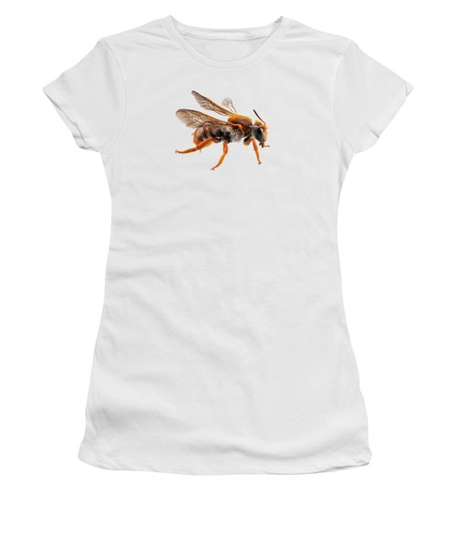 Bee Species Anthidium Sticticum Common Name Mason Or Potter Bee  Women's T-Shirt