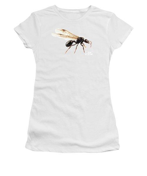 Black Winged Garden Ant Species Niger Lasius Women's T-Shirt