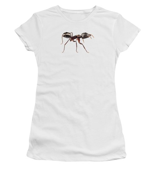 Carpenter Ant Species Camponotus Vagus Women's T-Shirt