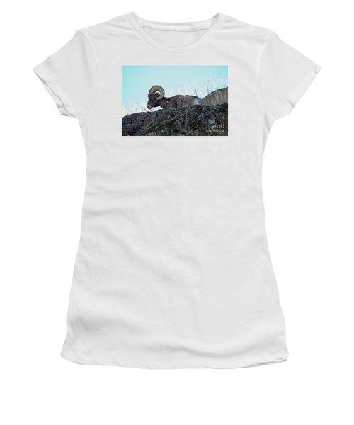Bighorn Sheep Women's T-Shirt