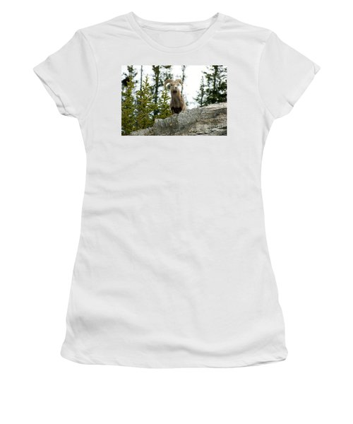 Canadian Bighorn Sheep Women's T-Shirt