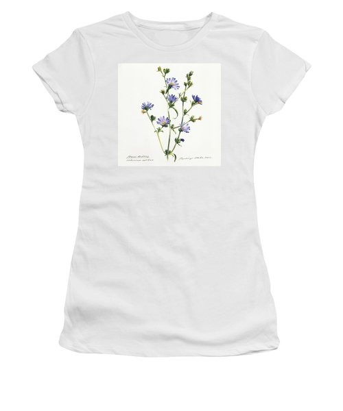 Chicory Women's T-Shirt