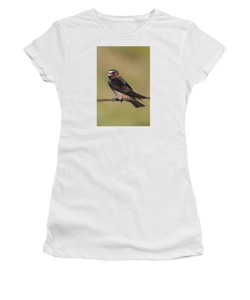 Cliff Swallow Women's T-Shirt