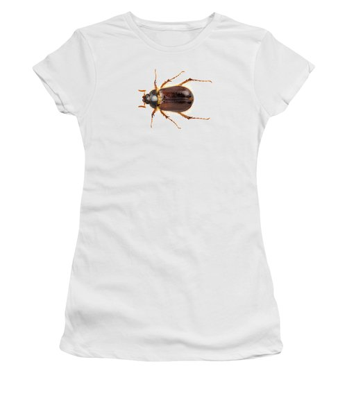 Cockchafer Or June Beetle  Women's T-Shirt