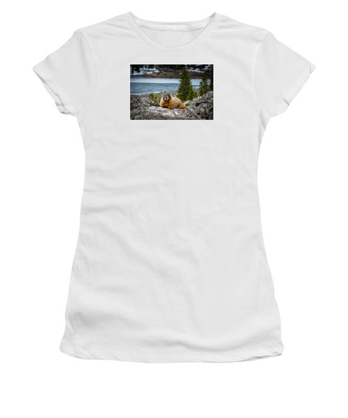 Curious Marmot Women's T-Shirt (Junior Cut) by Michael J Bauer