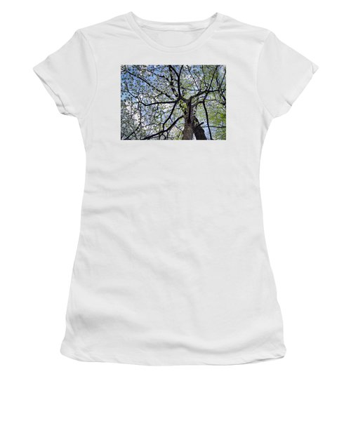 Dogwood Canopy Women's T-Shirt (Athletic Fit)