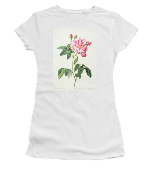 French Rose Women's T-Shirt