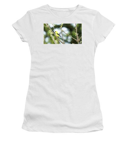 Goldfinch Women's T-Shirt