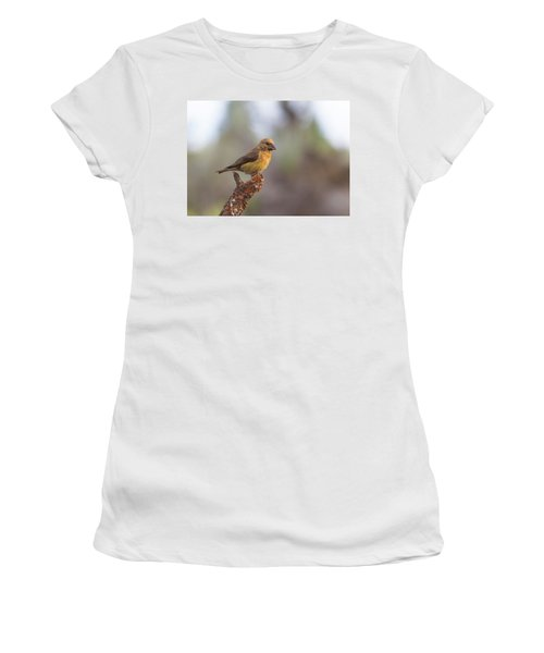 Juvenile Male Red Crossbill Women's T-Shirt (Athletic Fit)