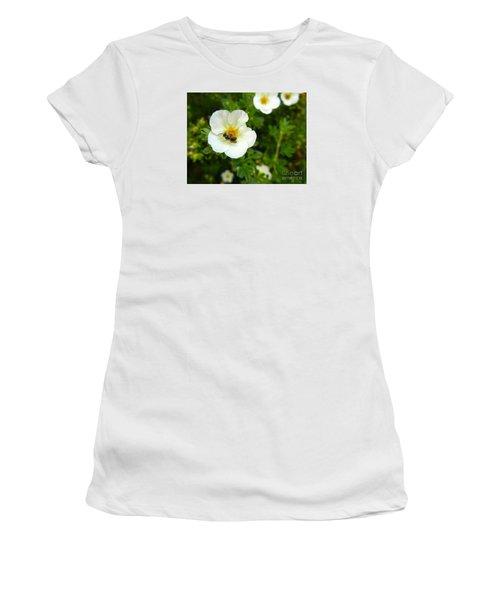 Massachusetts Carpenter Bee Women's T-Shirt (Junior Cut) by KD Johnson