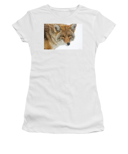 Mr. Coyote Women's T-Shirt