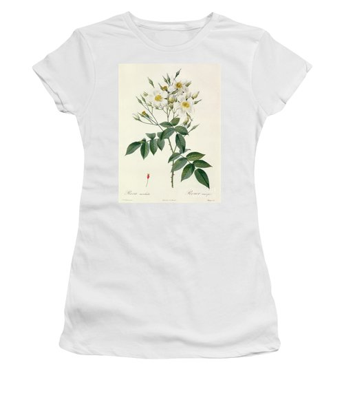 Musk Rose Women's T-Shirt