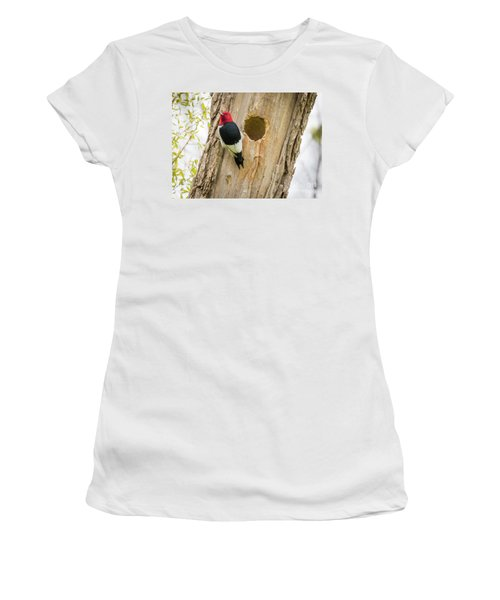Red-headed Woodpecker At Home Women's T-Shirt (Junior Cut) by Ricky L Jones