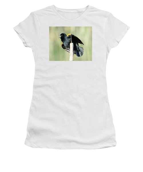 Women's T-Shirt (Junior Cut) featuring the photograph Red-winged Blackbird by Jack Moskovita