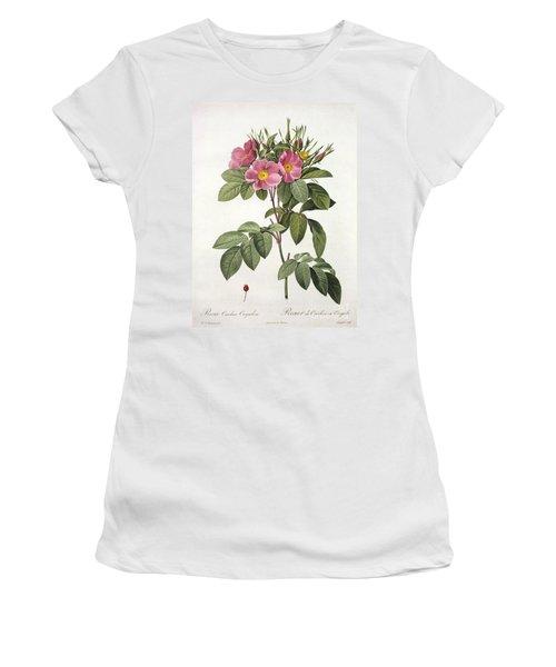 Rosa Carolina Corymbosa Women's T-Shirt
