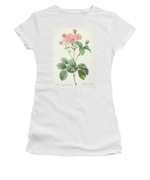 Rosa Centifolia Caryophyllea Women's T-Shirt
