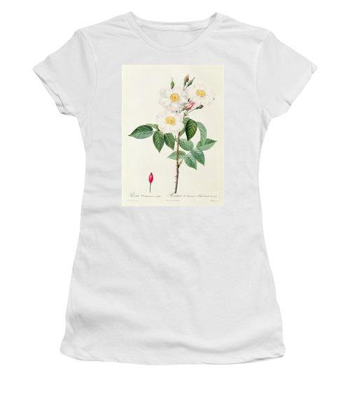 Rosa Damascena Subalba Women's T-Shirt