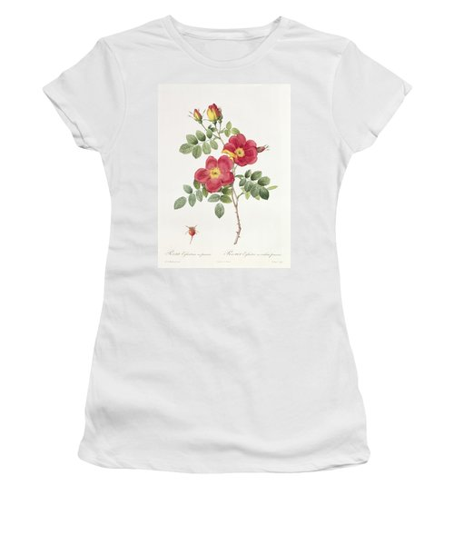 Rosa Eglantera Punicea Women's T-Shirt