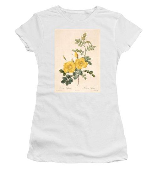 Rosa Eglanteria Women's T-Shirt
