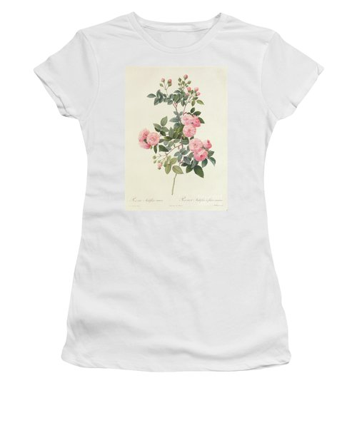 Rosa Multiflora Carnea Women's T-Shirt