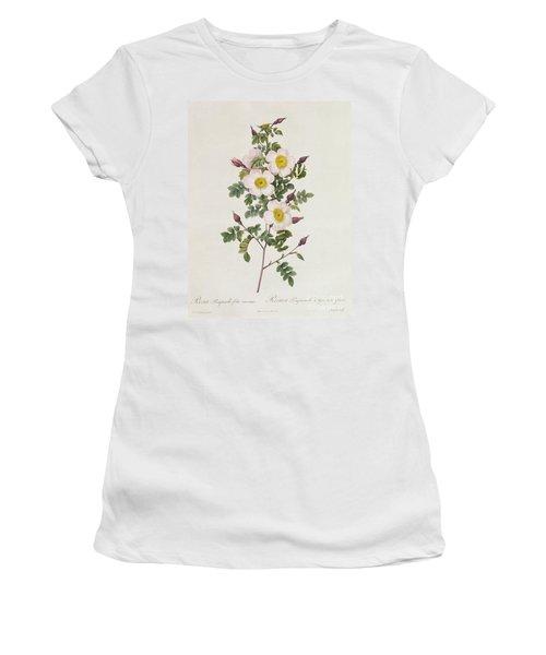 Rosa Pimpinelli Folia Inermis Women's T-Shirt