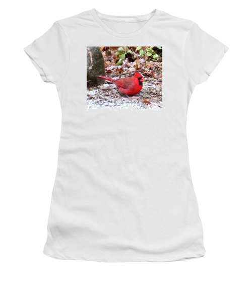 Snow Cardinal  Women's T-Shirt