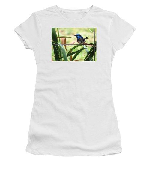 Fairy-wren 1 Women's T-Shirt