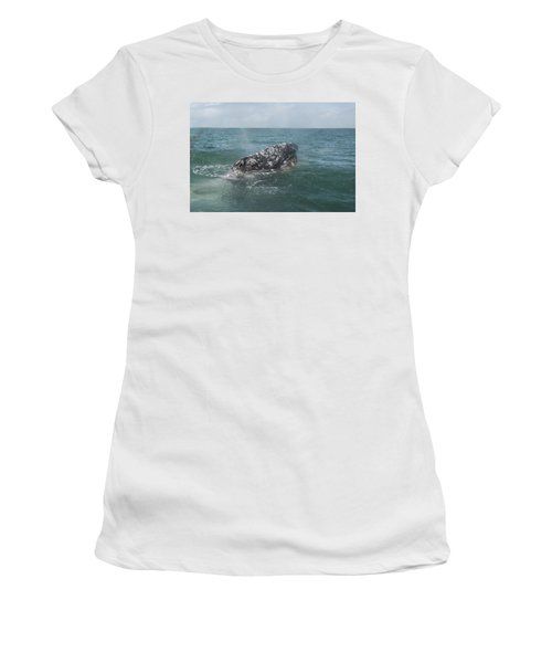 Gray Whale In Bahia Magdalena Women's T-Shirt