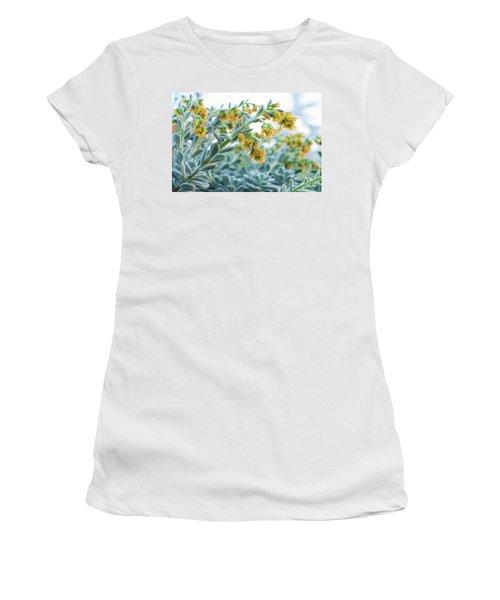 Mexican Echeveria In The  Morning Women's T-Shirt