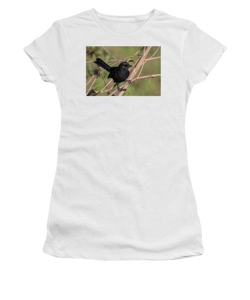Northern Black Flycatcher Women's T-Shirt