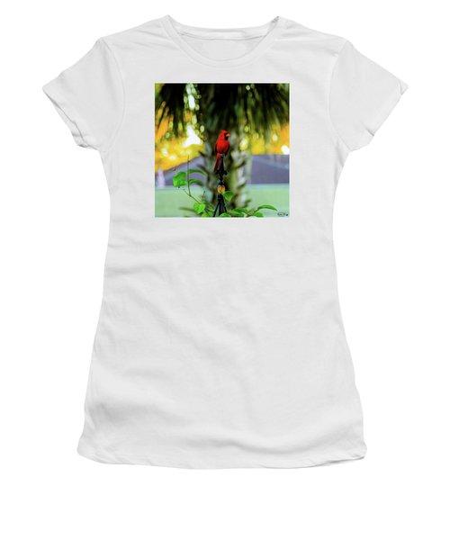 Proud Male Cardinal Women's T-Shirt