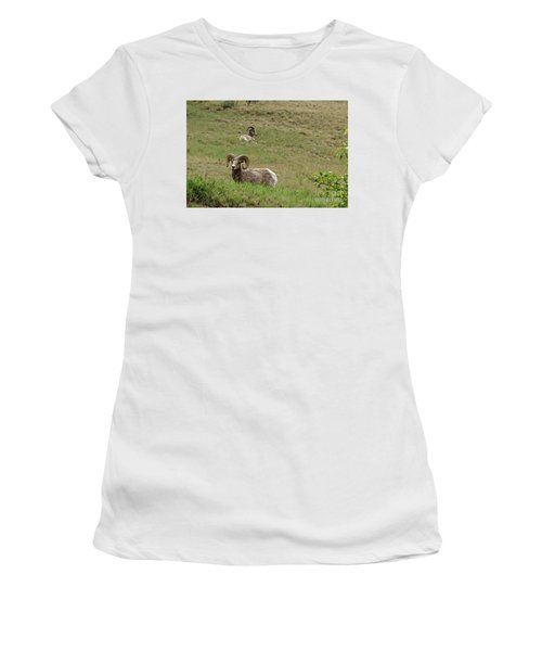 Resting Bighorn Sheep Women's T-Shirt